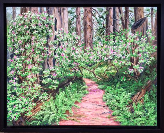 """Rhodies in the Redwoods"""