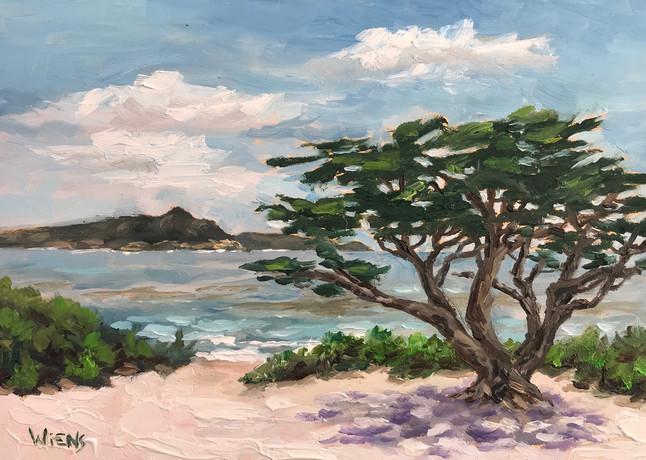 """""""Carmel Beach Cypress"""" 5x7"""" oil on gessbord"""
