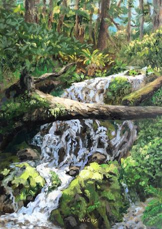 """""""Fern Falls"""""""