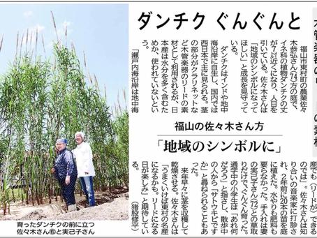 ダンチク ぐんぐんと(中国新聞)