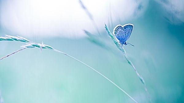 Nature background concept. Beautiful sum
