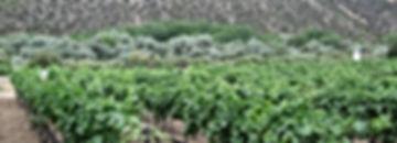 Black Mesa Winery in Velarde, New Mexico