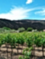 Black Mesa Winery vineyard in Velarde, NM
