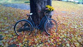 Bike on Farm.jpg