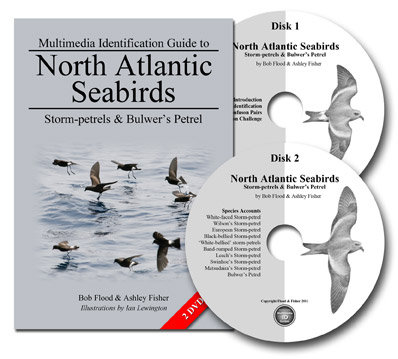 Multimedia Identification Guide: Storm-petrels & Bulwer's Petrel