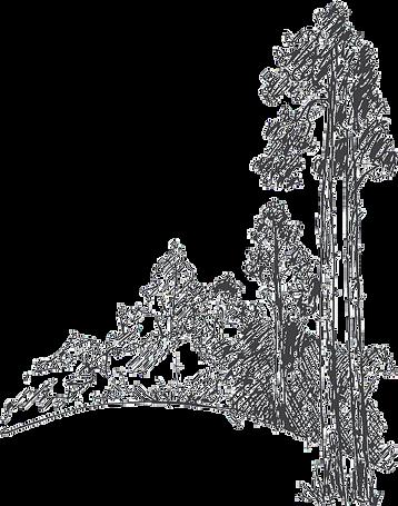 pnghut_drawing-tree-pine-sketch-coast-re