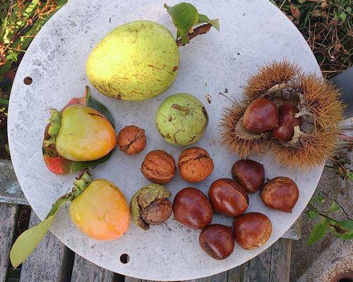 秋の木の恵み