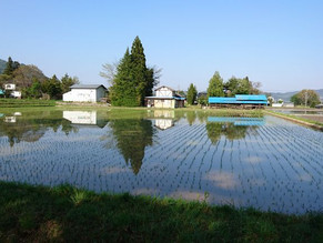 田んぼの水鏡。隣の田んぼは田植えが終わりました。