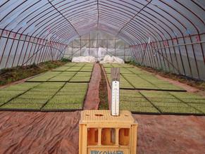 H28年の稲作開始、苗をビニールハウスでしばらく育てます。