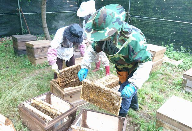 ミツバチの巣箱メンテナンス