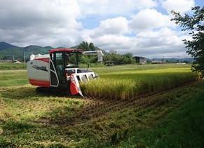 お米の収穫作業が終わりました