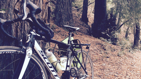 Scott in the Redwoods (2015)