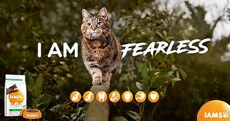 FB_SL_Cat_FINAL.jpg