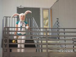 2013 Kaninen i Alice