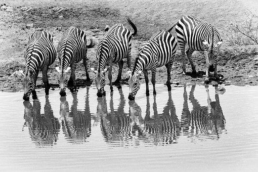 africa-4055178__340