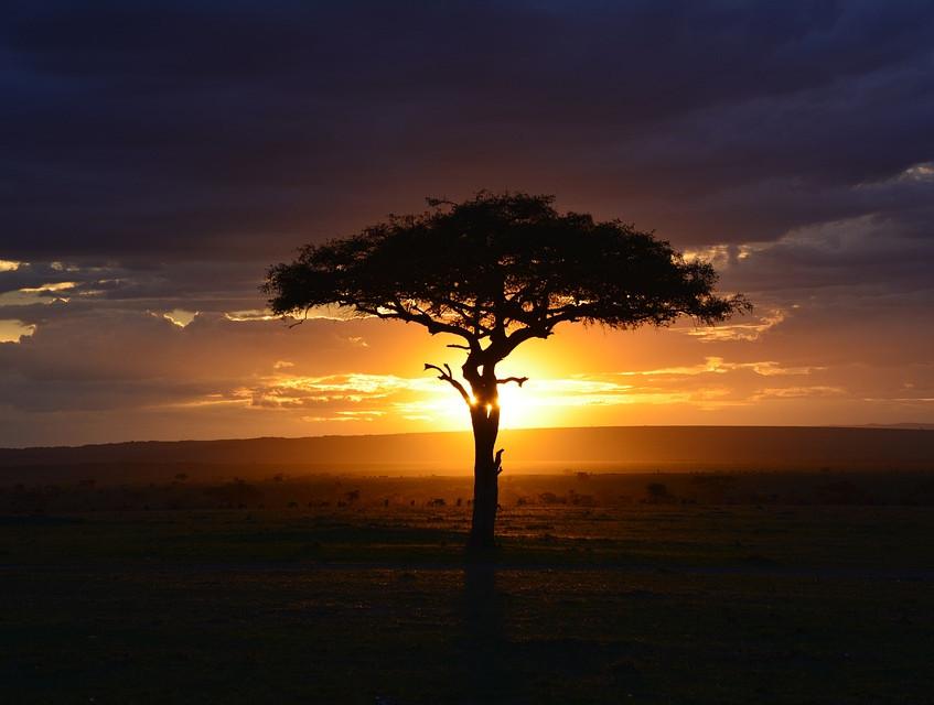 africa-3002460_960_720