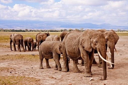 elephants-458990__340