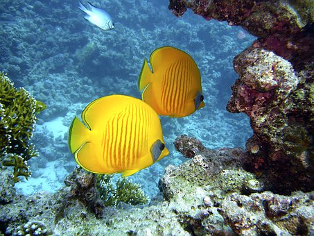diving-1656380__340