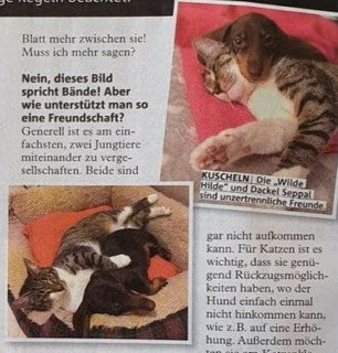 "Wie ""Hund & Katze"""