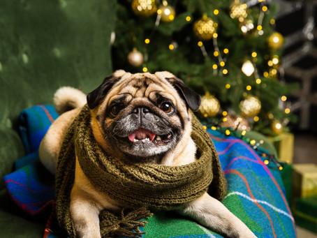 Tierische Geschenke zu Weihnachten