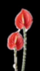 Straight flower dem.png