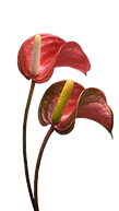 bend flower dem.png