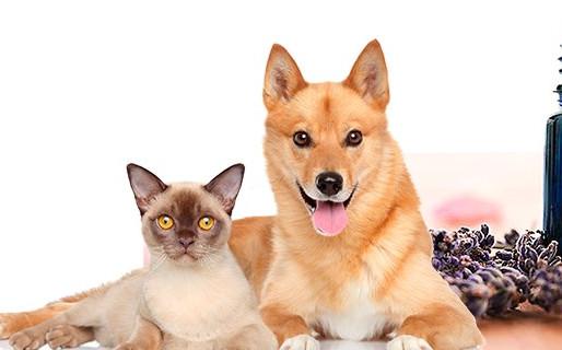 Oli essenziali doTERRA per animali domestici