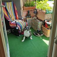 Farbenfroher, gemütlicher Balkon mit posendem Hund