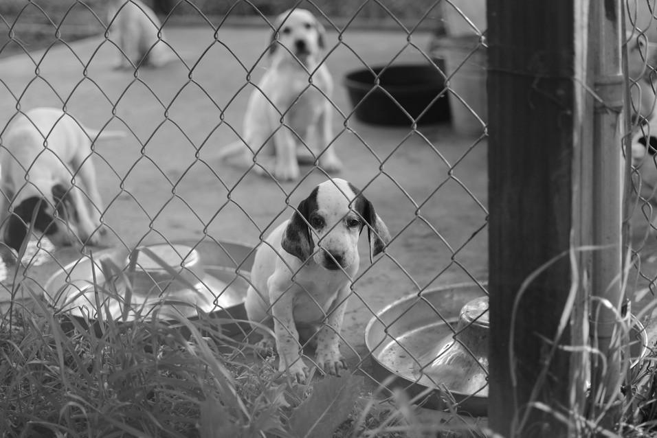 Sad puppy.