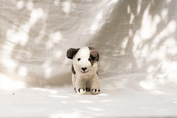 Shamba Puppy
