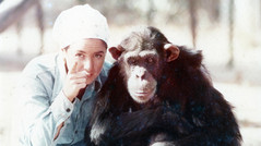 PREVIEW: Lucy, The Human Chimp, Channel 4