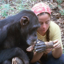 CHANNEL 4 TO TELL THE STORY OF LUCY, THE CHIMPANZEE RAISED AS A HUMAN