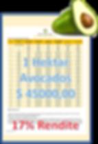 avocado renditebild vor freistellung_cli