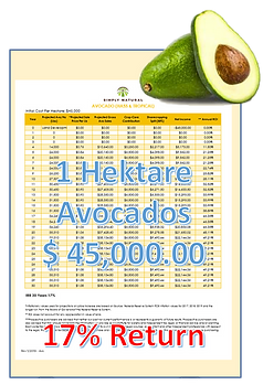 Avocados en vor Freistellung_clipped_rev