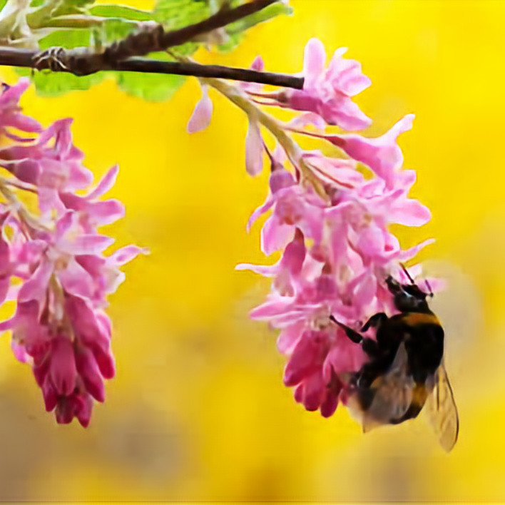 Basics in Bee Keeping and Planting for Pollinators