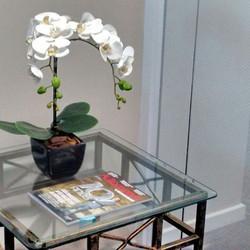 Um mimo com duas orquídeas permanentes!