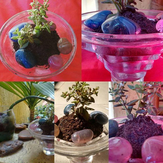 #artes #jardinagem #suculentas