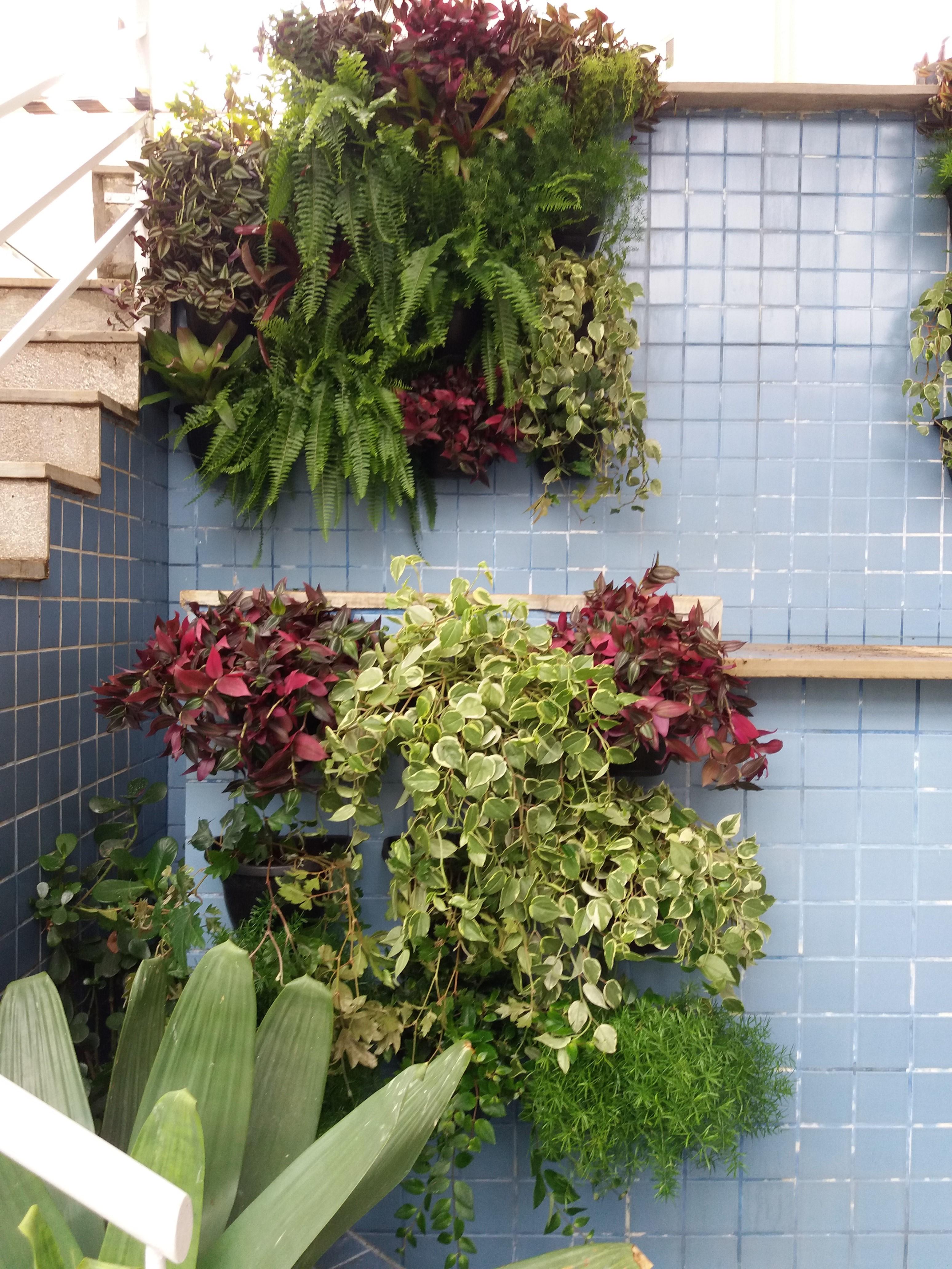 Plantas pedentes 1