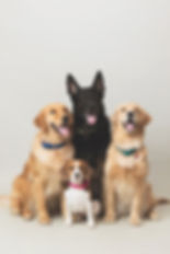 momo-studio-pet-siblings-pawblings-dog-p