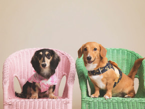 5 Reasons Why You Should Have A Professional Photoshoot with Your Pets