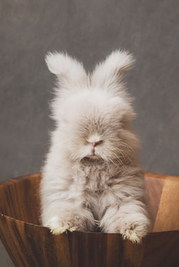 014-momo-studio-rabbits-photoshoot-pet-p