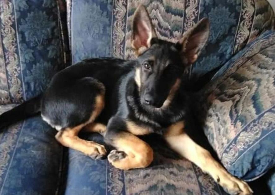 Junior Puppy - 1st