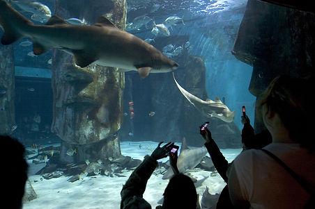 sea-life-london-aquarium-london-2.jpg