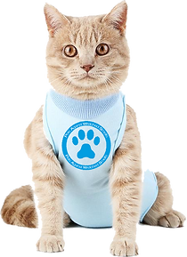 PAWS Cat 1.png