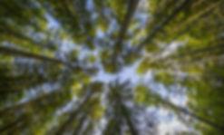 trees-looking-up.jpg
