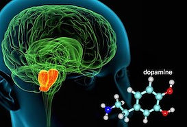 princ_rm_illustration_of_brain_and_dopam