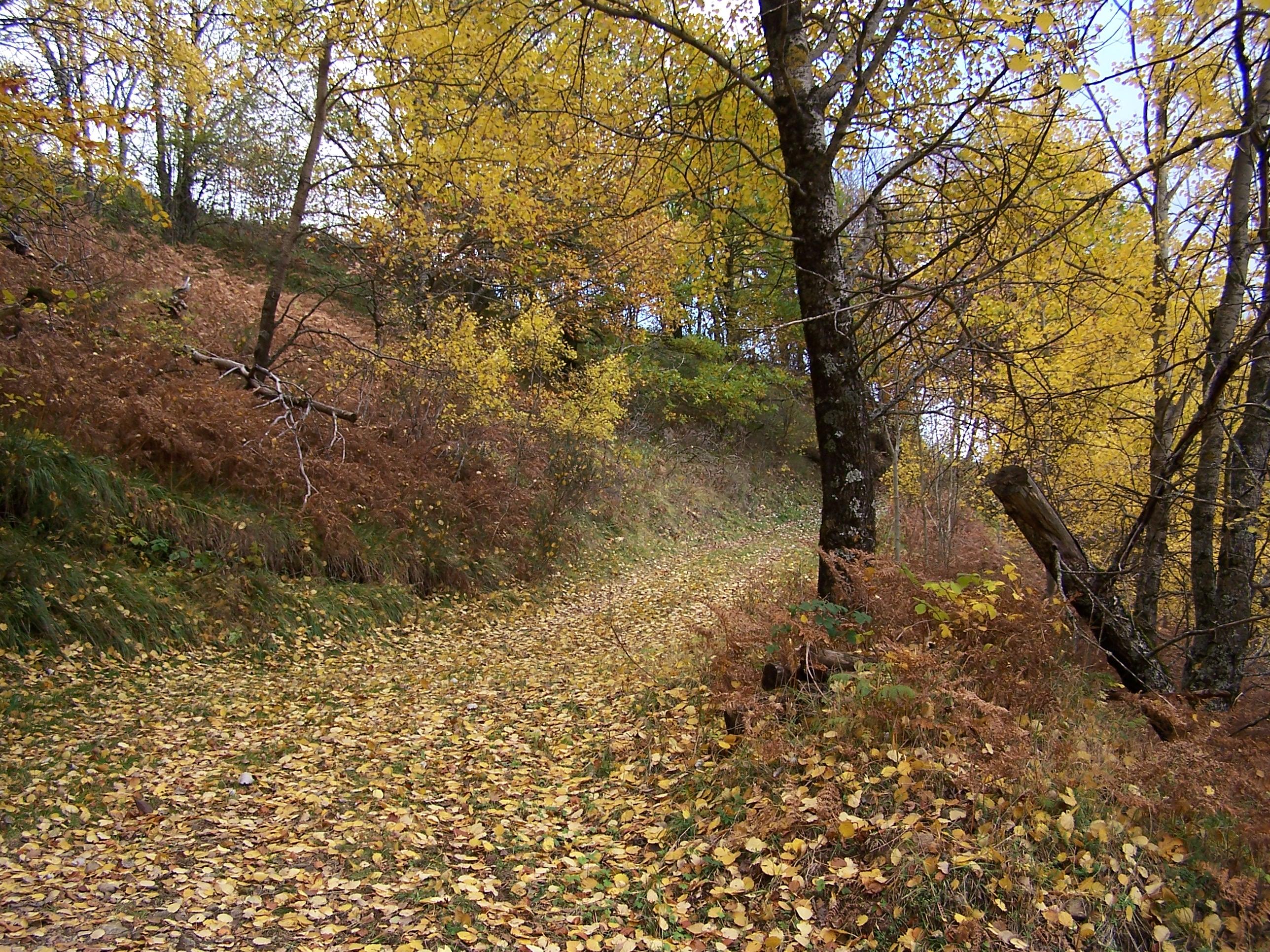 feuilles...couleurs d'automne