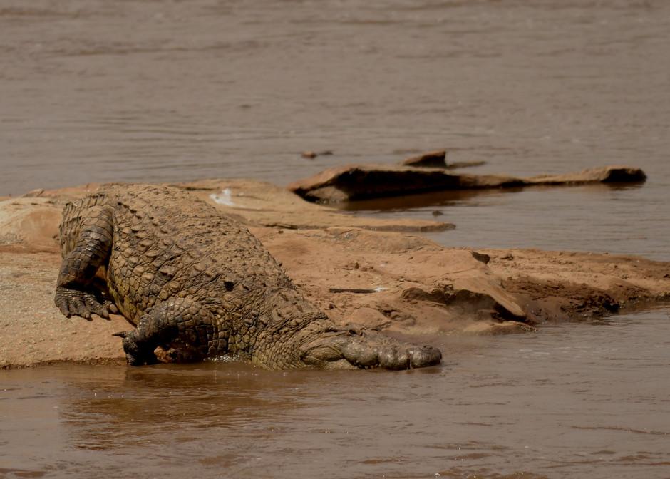 DSC_4310 croc.JPG