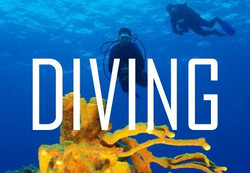 DIVING in Cancun ,Cozumel,Cenotes