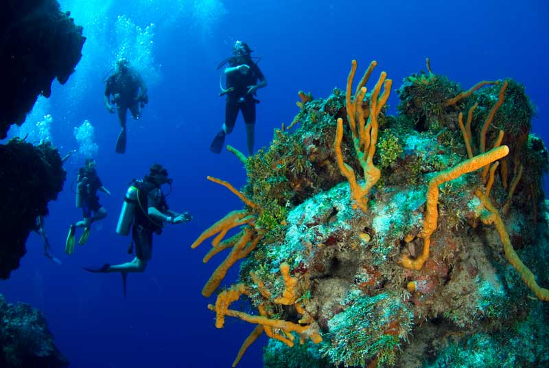 divers-in-cozumel.open water diver,